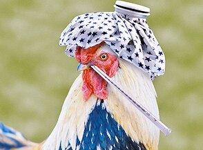 Птичий грипп: мифы и реальность