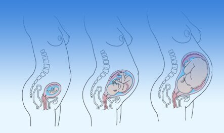 Беременность по триместрам